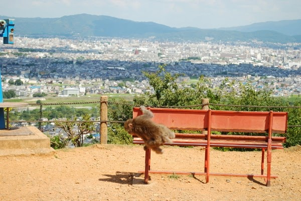 Monkey Park is one of the many wonderful things to do in Kyoto