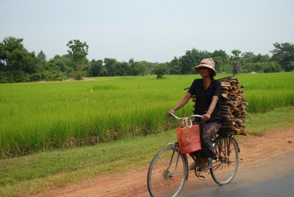 Woman Carrying Wood Sticks on her Bike at Angkor Wat, Cambodia