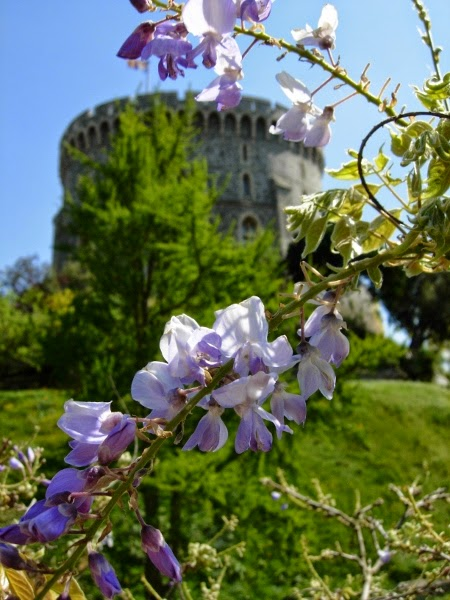 Windsor Castle with Spring Flowers, England