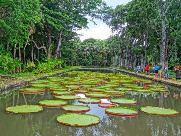 Pamplemousses Botanical Gardens and Water Lillies, Mauritius
