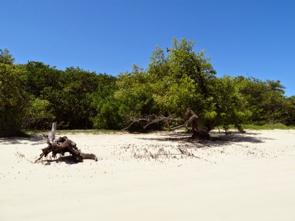 Gorgeous mangroves on the beach