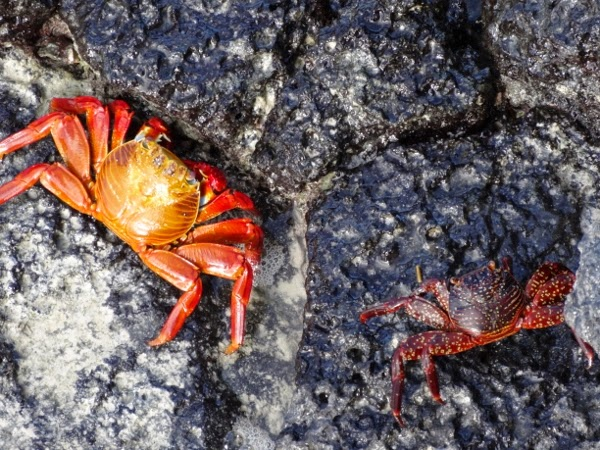 Love the crabs in the Galapagos