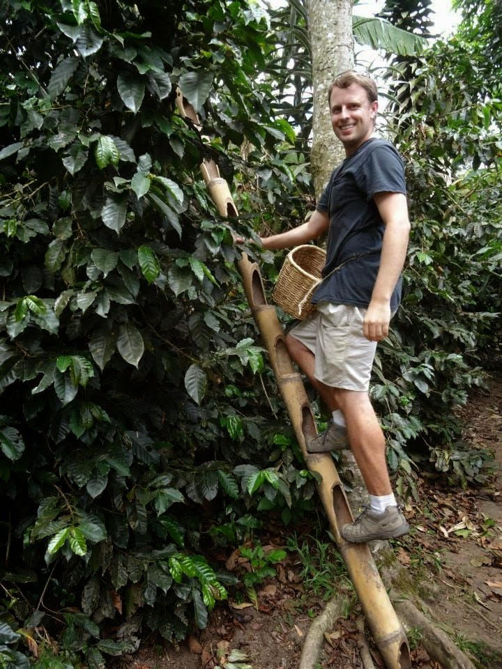 Harvesting coffee in Colombia