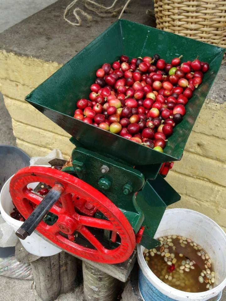 Processing coffee cherries