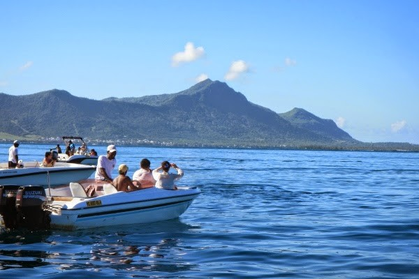 Tracking wild dolphins in Mauritius