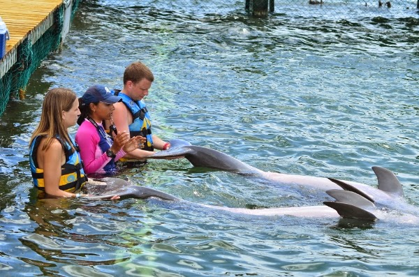 Learning about dolphins at Moon Palace