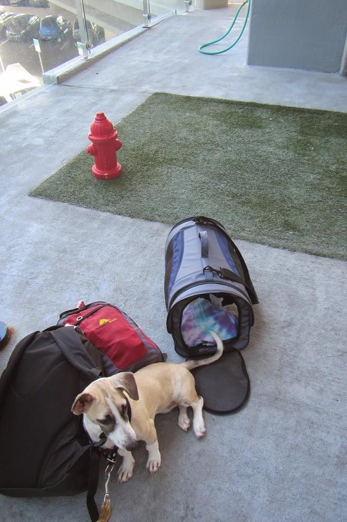 Pet relief area at Atlanta airport