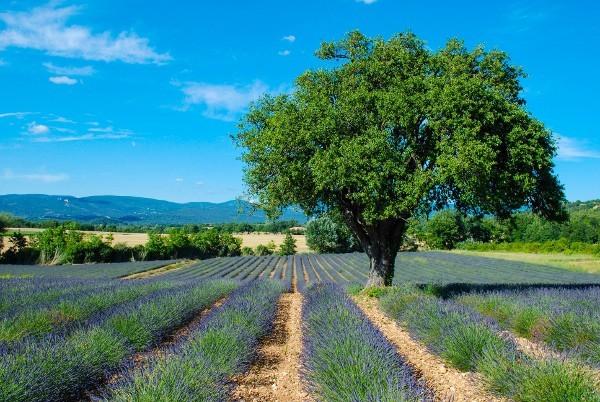 Day Trip to Avignon