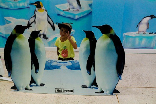 Penguin Sizes at the Chiang Mai zoo