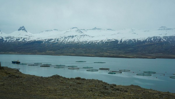 A Cloudy Day in the Fjords of Iceland