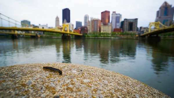Discover the Burgh's Photo Walk
