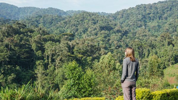 Bwindi Impenetrable National Forest