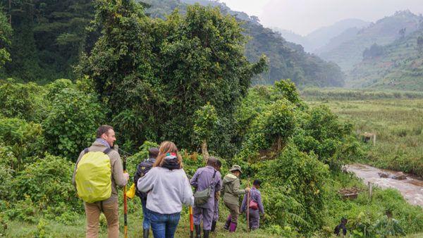 Hiking Bwindi