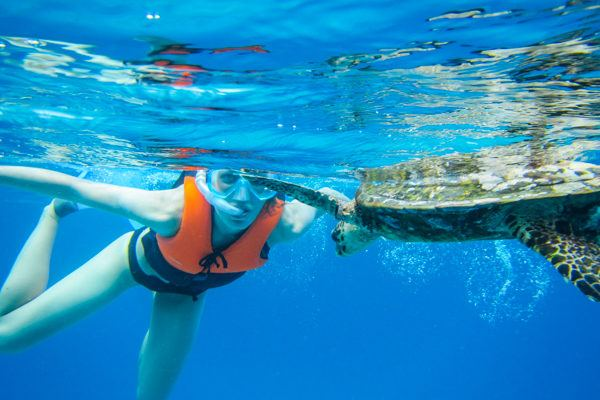 Snorkeling with Hawksbill Sea Turtle in Seychelles