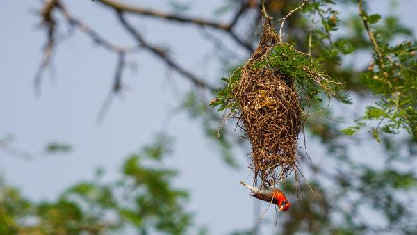 Birds in Africa