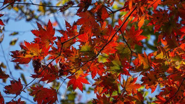 Fall Foliage in South Korea