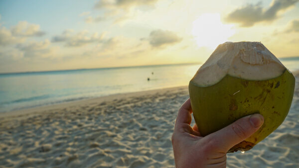 Coconut on the Beach at Sunset