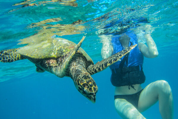Snorkeling with a Turtle on Praslin