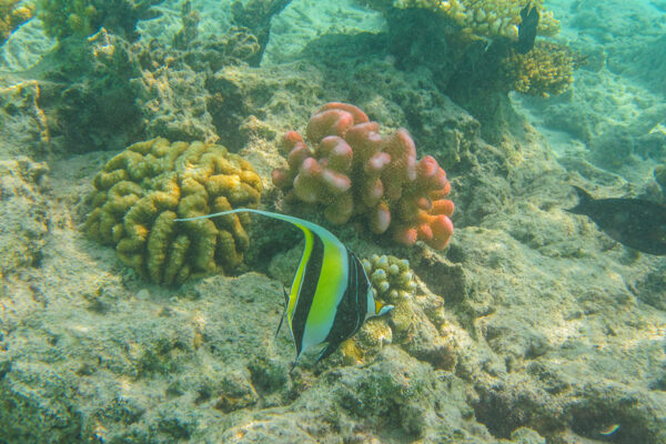 Snorkeling on Fulidhoo