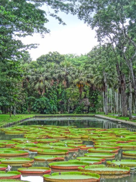 Park in Mauritius