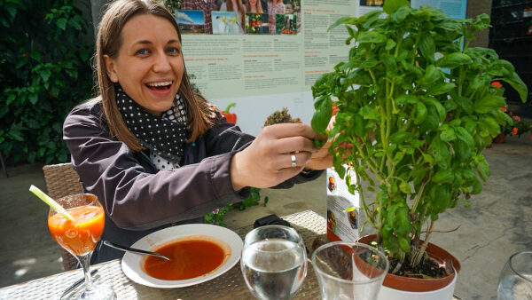 Tomato Soup and Basil Plant from Fridheimar Farm