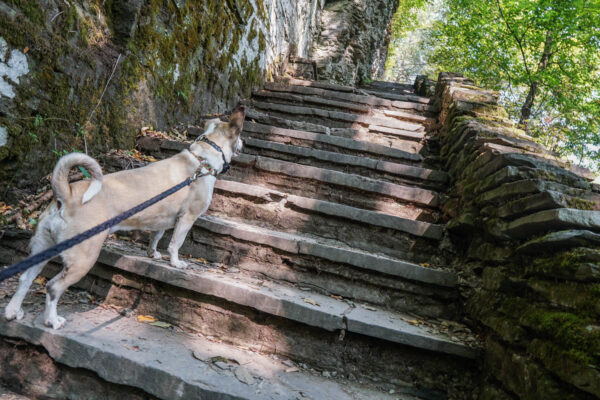 Steep Stairs at Robert H Treman State Park