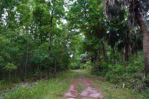 Trail at Pinckney Island Wildlife Refuge