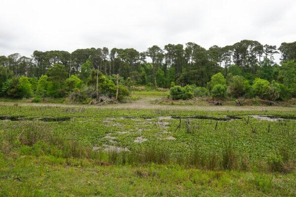 Marshy lake at Pinckney Island, SC
