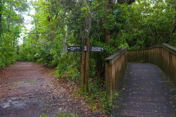 Various Trail Types at Sea Pines Preserve