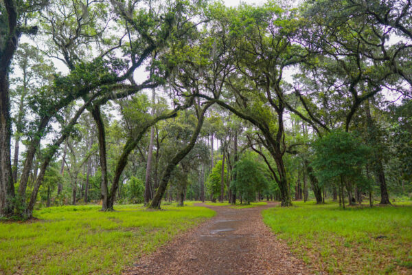 Trees at Sea Pines Forest Preserve