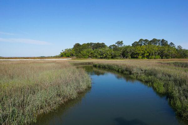 Salt Marsh at Low Tide