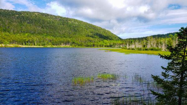Pond Near Acadia Carriage Trail
