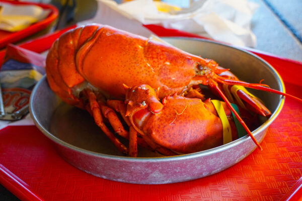 Whole Lobster from Thurston's Lobster Pound