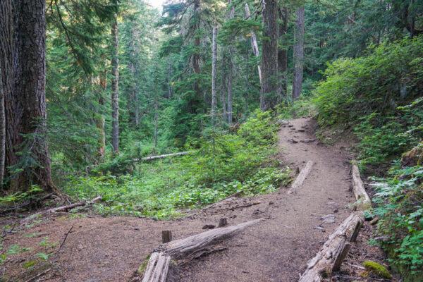 Easy Hiking Trail at the Summit Lake Hike
