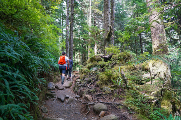 Trail at Lake 22 Near Seattle